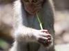 Monkey Forest.  Ubud, Bali, Indonesia